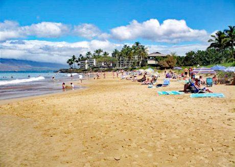 Maui Banyans