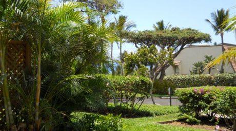 Maui Kamaole B110