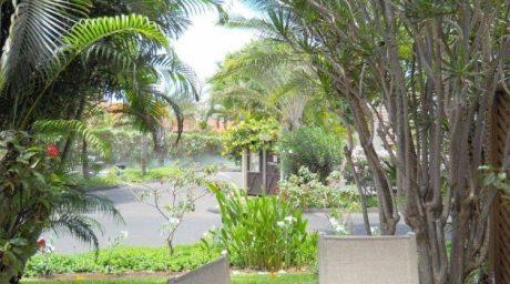Maui Kamaole C103