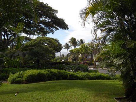 Maui Kamaole I109