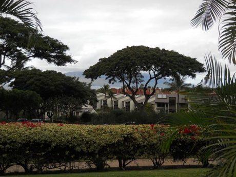 Maui Kamaole I114