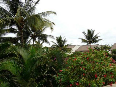Maui Kamaole K205