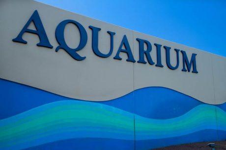 Local Maui Ocean Center offers a wonderful Aquarium