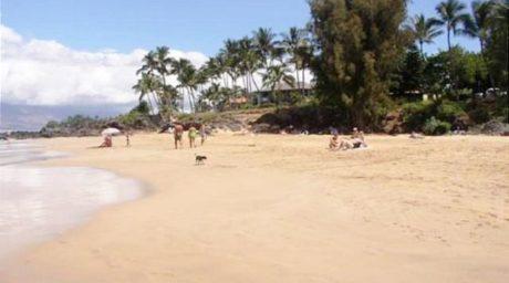 Hale Ili Ili overlooking Kamaole Beach #1
