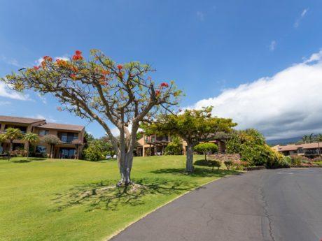 Gorgeous Landscaping - Wailea Ekahi is full of gorgeous landscaping and lush tropical plants.