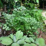 Edible Community Garden
