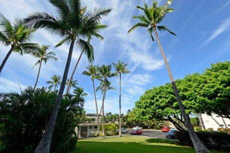 Kihei Akahi DG05 Maui (12)
