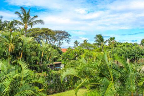 Maui Kamaole D205