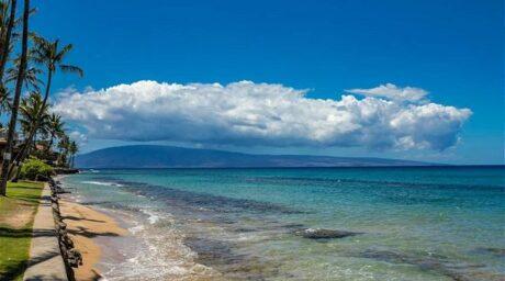 Paki Maui #318